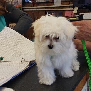 small dog on desk